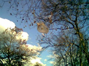 Bag and tree. Photo by Angela Alston